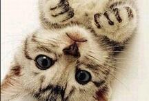 {cuteness}
