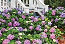 GARDEN//PORCH//BACKYARD / Garden tips, backyard decor, front porch decor
