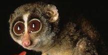 Animal Face Close-Ups