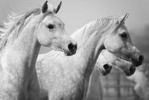 Horses / by Lottie Smith