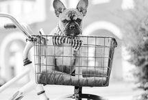 Puppy Love / by Lottie Smith