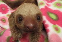 Cute Animals / by Author S.R. Johannes (Shelli)