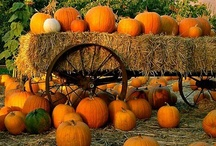 Fall harvest / by Gloria Erickson