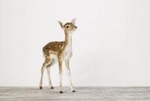 Deer Sweet  Deer / by Marie Agneau