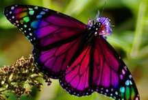 Butterfly, Dragonflies and Ladybugs / the good bugs only! / by Jessyca Garcia
