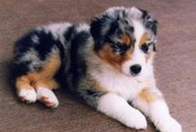 Dogs / Making life easier with furry friends! Visit me at http://www.renaissancemama.com!