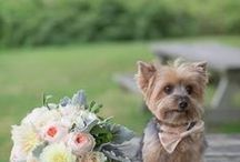 "Pets in Wedding / Now who can deny these adorable little faces?! The wedding day should include your furry little family members, because pets have the keys to our hearts like no other. So we're sharing the cutest wedding pet moments that will make you go, ""Awwwwww!"" / by MODwedding"