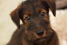 animals - dogs & pups