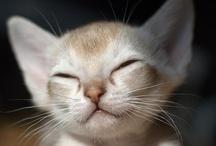 animals - cats & kits 1