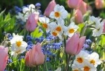 Spring / My favorite season of the year, different ways to celebrate it. / by Donna Jackson