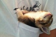 Cats & Kitties / I am a cat addict...cat lover...cats are amazing creatures and you can just love them!