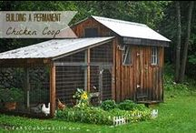 Chickens on the farm / all things chickens & chicks. feeding chickens, chicken coops, raising chickens.