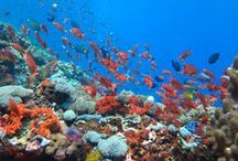 Scuba Diving Adventures / Photos from scuba diving around the world.  / by Nick's Travel Bug