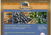 Tampa Website Design Portfolio / South Island Design builds websites for small and medium sized businesses in Tampa, Florida.