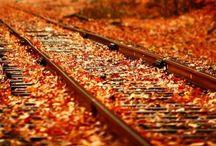 I love Fall! / by Heather Wanlass