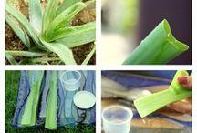 Phytologie  / L'art de soigner avec les plantes