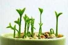 Mon petit potager | Growing veggies
