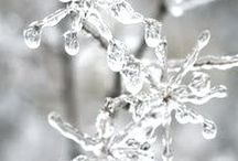 Seasons~Winter / by Carol ~