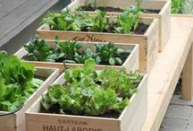 home: {GREEN THUMB} / by P.Interest Pins