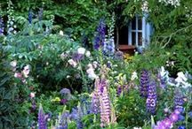 English Cottage Garden / by Carol ~