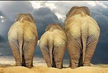Camels, Elephants & Giraffes , Oh My!  / by Van Essa