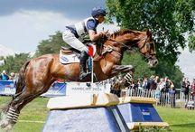 Horses / by Lauren Jones