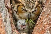 Ꭿиiмåℓs: ᵒʷˡˢ... / #owls #nature #photography