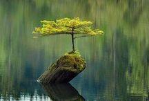 ɳᗩTᘎᖇᙓ... / Nature earth, water, land, sunset, night, day, moon, sun