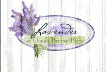 Lavender at Ocean Breeze