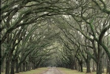 The South / Some of my favorite places and things that I love about the south...