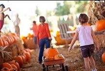 Fall Gardens / Calloway's Nursery celebrates Fall with incredible in-store decorations and an amazing selection of Fall Flowers and Decor. See the pumpkins, scarecrows, corn stalks, hay bales, and more!
