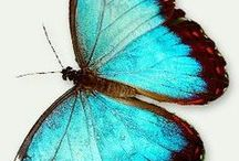 Ꭿཞɬ: Blue butterfly / Im always thinking of a blue butterfly when someone is in heaven or somewhere else... My angels... I miss them a lot in my life but they are still with me because I still talk about them and they are all loved... Maybe It can work for you too..