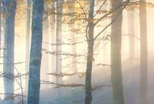 °∙MIST∙° erious / misty, foggy, or just atmospheric...☺