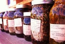 Fermented recipes & benefits / by Stephanie Bice