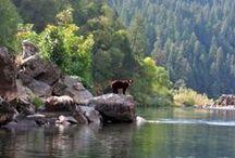 Oregon: wild and scenic