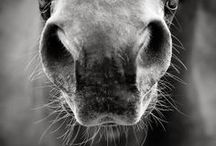 Equine / by Ashley Wingate