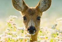 Oh, Deer / by Neeltje van Bekkum