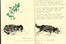 Susan Fox's Mongolia Journals