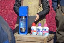 Our Ocean Spray® Commercial! / A behind the scenes look at our commercial in the Ocean Spray® cranberry bog!