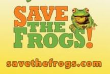 SAVE THE FROGS! / SAVE THE FROGS! is the world's leading amphibian conservation organization. Our mission is to protect amphibian populations and to promote a society that respects and appreciates nature and wildlife. We work in California, across the USA, and around the world to prevent the extinction of amphibians, and to create a better planet for humans and wildlife. Learn more and donate at http://savethefrogs.com