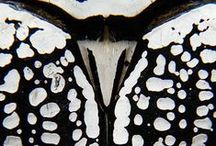 Insects / Collection of insects, looking at microscopic and patterns
