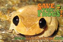 Frogs / Frog photos!