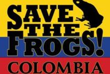 SAVE THE FROGS! Colombia / http://savethefrogs.com/colombia