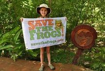 Save The Frogs Day / Save The Frogs Day is the world's largest day of amphibian education. http://savethefrogs.com/day
