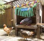 Cute Coops for Chickens / Having chickens in the yard is a great way to have fresh eggs every morning, fun for kids, and good for keeping bugs from eating your garden. Rent space to have your own chicken coop, it doesn't take too much room and they're easy to take care of.