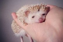 Critters / Animals, mostly really cute ones