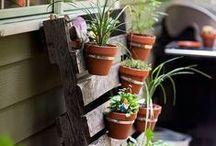 Gardening & Flowers / by Jennifer Piazza