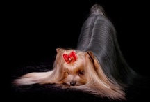 Dogs  / by Chivelle Designs