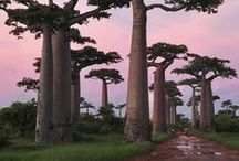 Trees / Trees, lots of beautiful trees...
