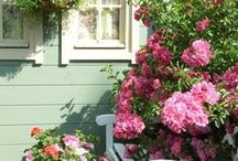 I'm a balcony-gardener